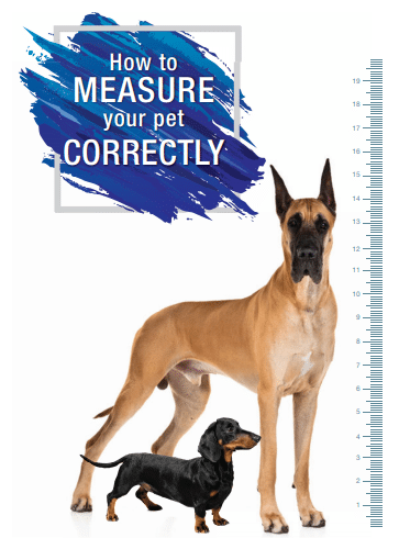 How to Measure Your Pet Correctly