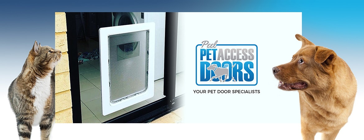 Home-Page-A-Pet-Banner